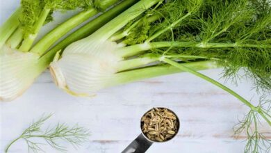 Photo of Fennel Seeds Advantages In Your Daily Health Diet