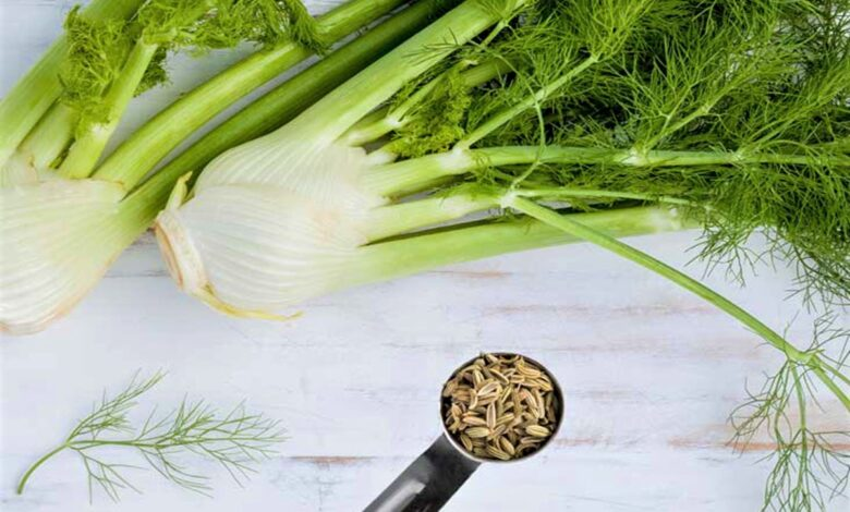 fennel seeds in India