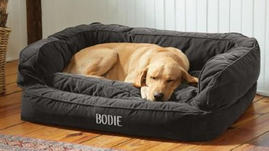 Photo of What are some top Bed Brands for the Dogs