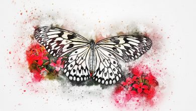 Photo of Butterfly Drawing For Kids Inspiration