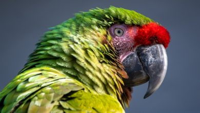 Photo of What is interesting about parrots?