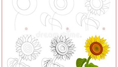 Photo of How to draw a Sunflower step-by-step realistic