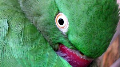 Photo of How Do Parrots Protect Themselves?