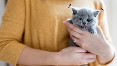 Photo of Kitten Care Regime – Know Everything about Raising One