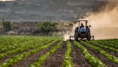 Photo of Crop diversification – The future of agriculture sector