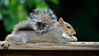 Photo of You've Got Squirrels in Your Home.